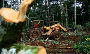 desmatamento ebc