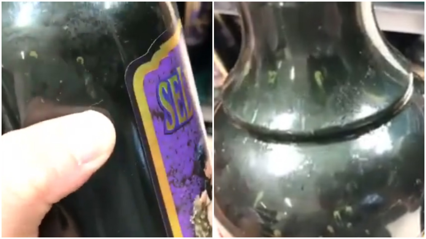 Jovens encontram larvinhas dentro da catuaba e vídeo viraliza