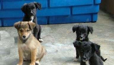 campanha de adoção de cães e gatos
