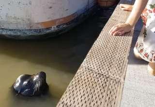 menina atacada por foca
