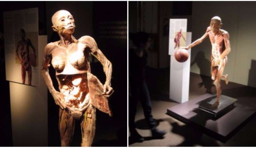 fantástico corpo humano