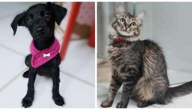 feira de adoção de cães e gatos em BH