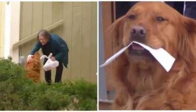 cachorro faz compras para idosa de quarentena