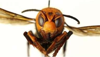 vespa assassina