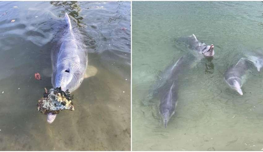 golfinhos humanos