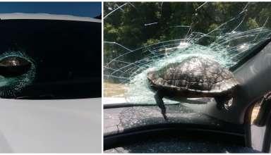 acidente tartaruga voadora