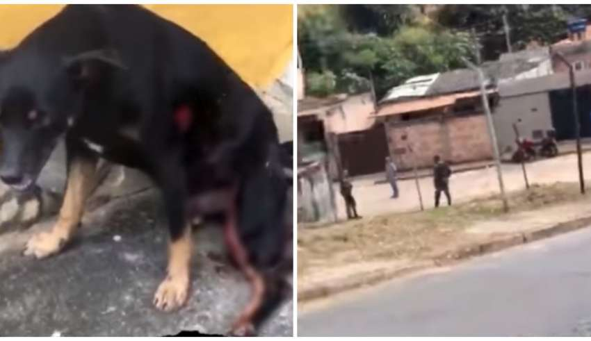 militares atiram cachorro contagem