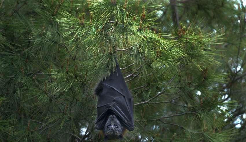 raiva mordida morcego