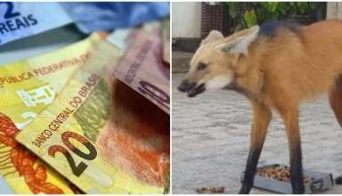 Dinheiro lobo-guará