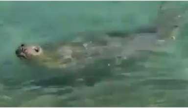 elefante marinho rio