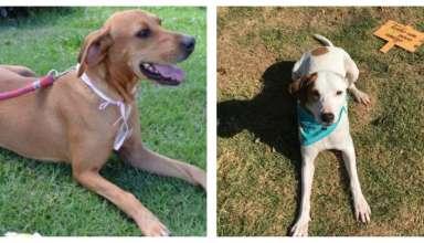 Cachorro resgatados do desastre da Barragem em Brumadinho