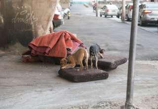 cachorros abandonados calçada colchões belo horizonte