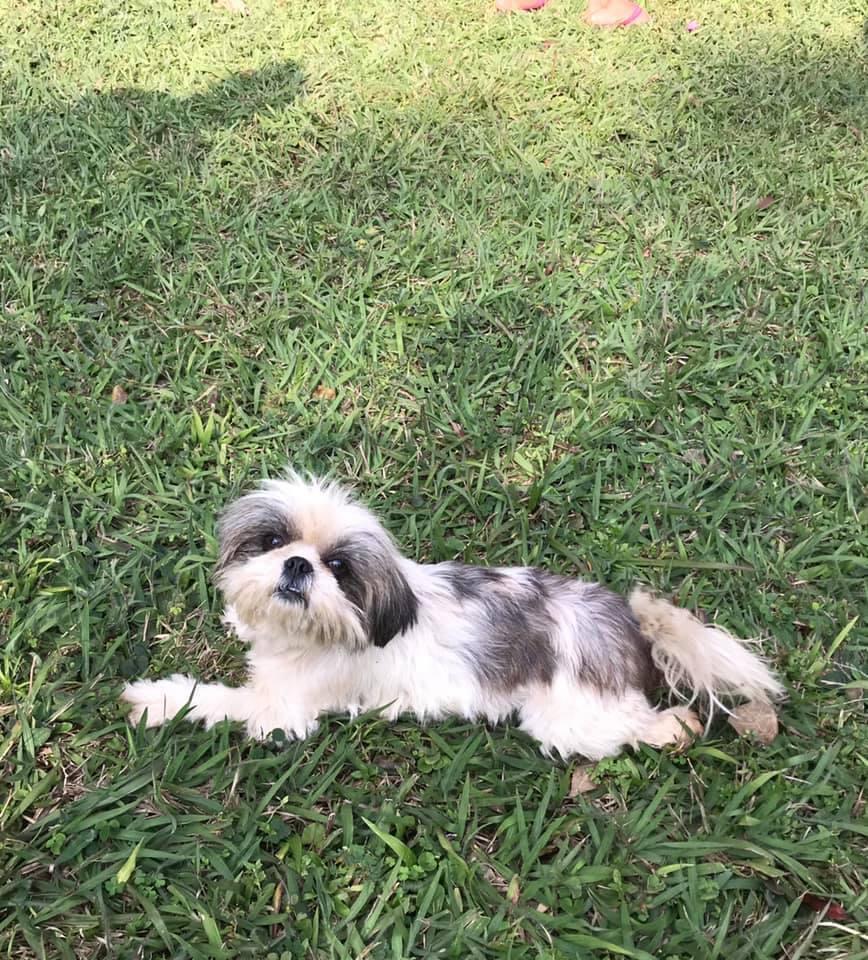 cachorra desaparecida betim