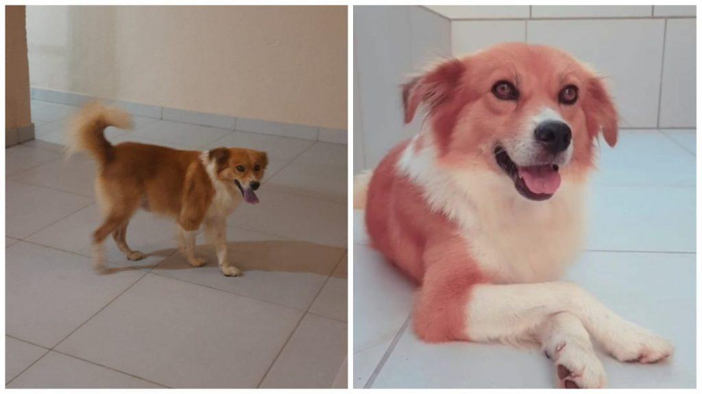 cãozinho sem dono bh