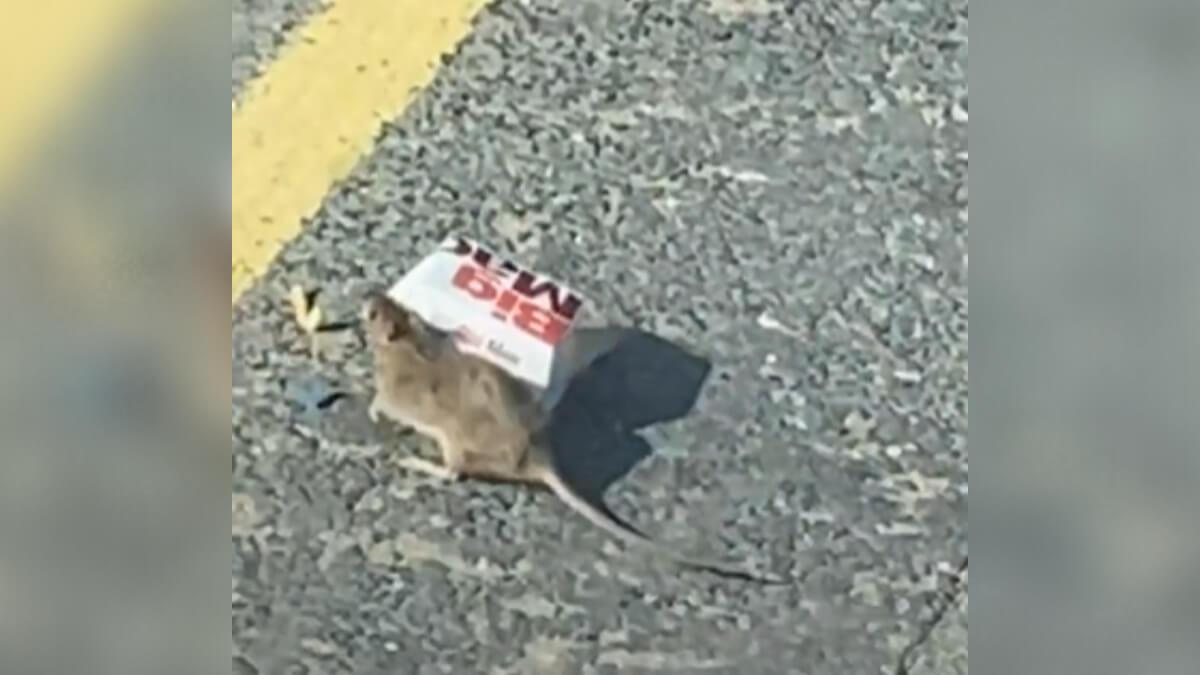 rato-carregando-caixinha-lanche